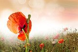 Parting with poppy day
