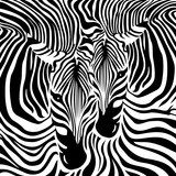 In a zebra code - monochrome animal