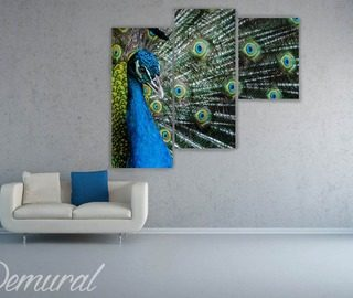 a peacocks eye canvas prints animals canvas prints demural