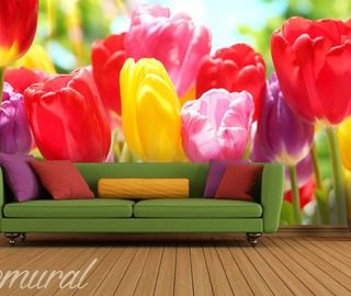 give me a hug mr tulip flowers wallpaper mural photo wallpapers demural