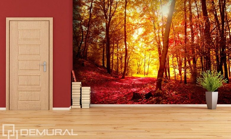 autumn walk in the forest forest wallpaper mural photo wallpapers demural