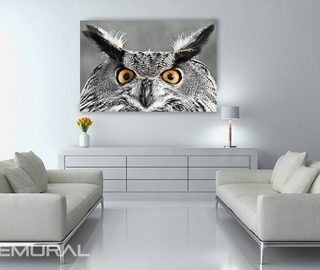 smart owls look canvas prints animals canvas prints demural