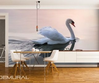 softly swan song animals wallpaper mural photo wallpapers demural