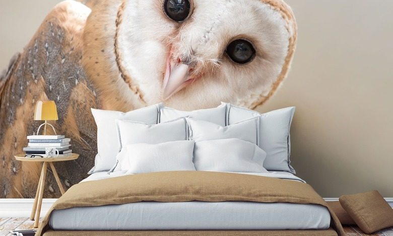 from pure owl curiosity animals wallpaper mural photo wallpapers demural