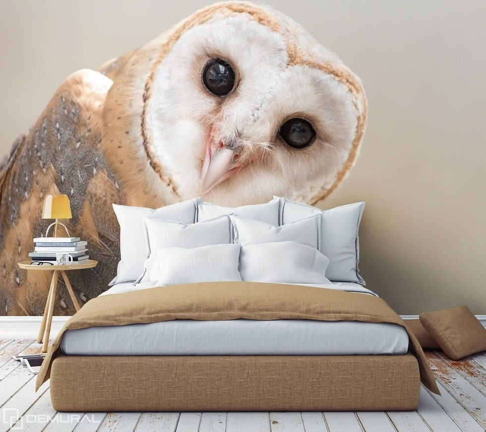 From pure, owl curiosity Animals wallpaper mural Photo wallpapers Demural